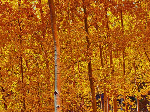 Best Time For Fall Colors in Arizona