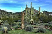 The Top 3 Things To Do While You're in Arizona for the Super Bowl