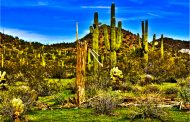 Top 10 Arizona Tourist Attractions