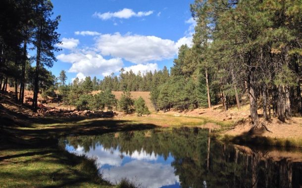 7 Amazing Fishing Spots in Arizona