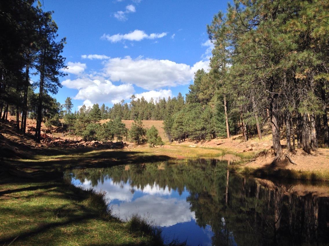 7 Amazing Fishing Spots in Arizona